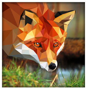 Triangle Fox