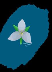 Light Blue Flower by nmonag