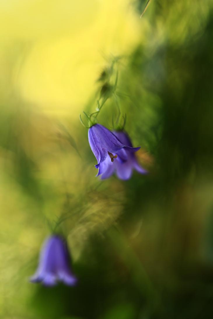 Blue bells. by Sparvoga