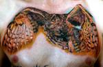 full chest owl