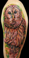 owl arm piece by tat2istcecil