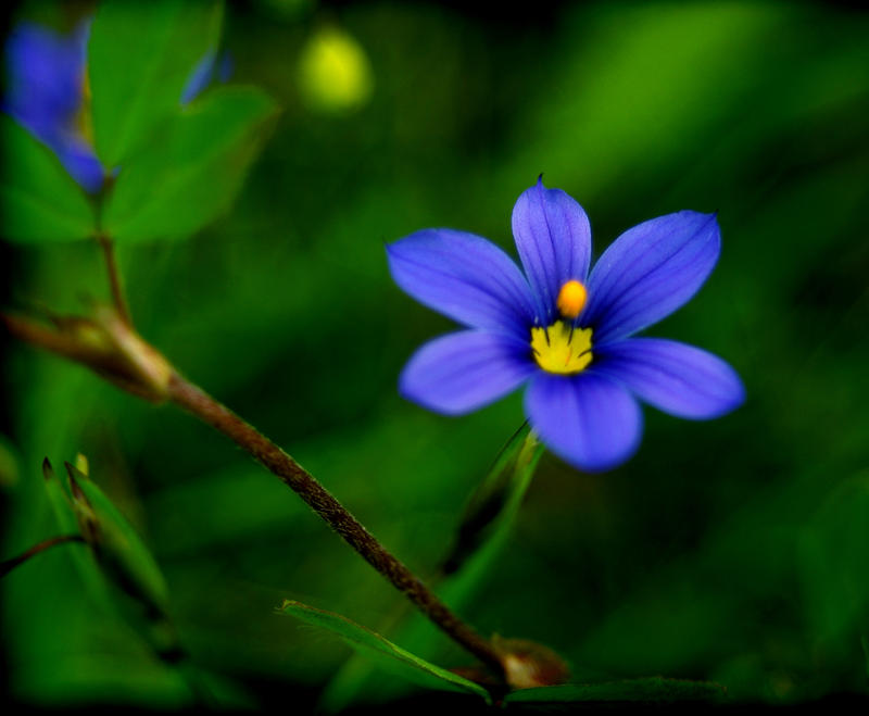 Tiny Blue Flowers by scott555