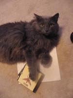 my cat likes Nirvana by IV13