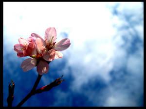 Springbranch