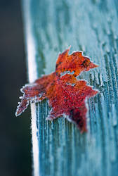 Frosted leaf 2 by pete4