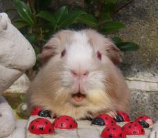 Archie's cute little face by DemureGirl