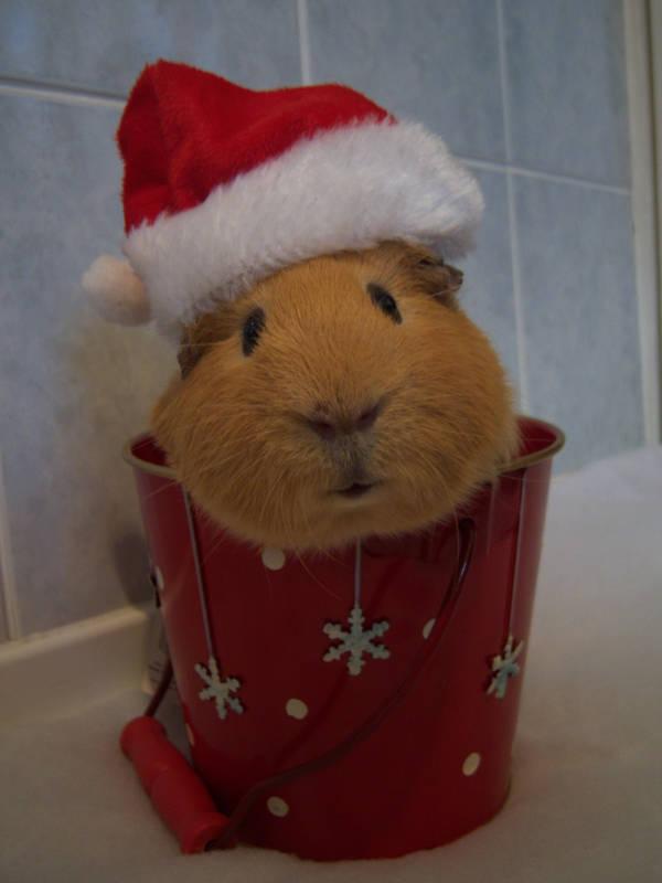 Christmas Alfie by DemureGirl