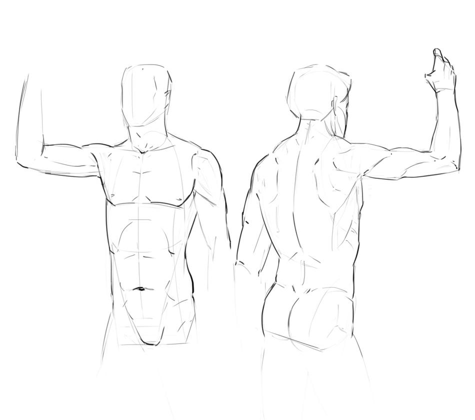 Anatomy study - front and back by ChuchuaN