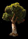 Tree Stock Photo PNG - DSC 0516