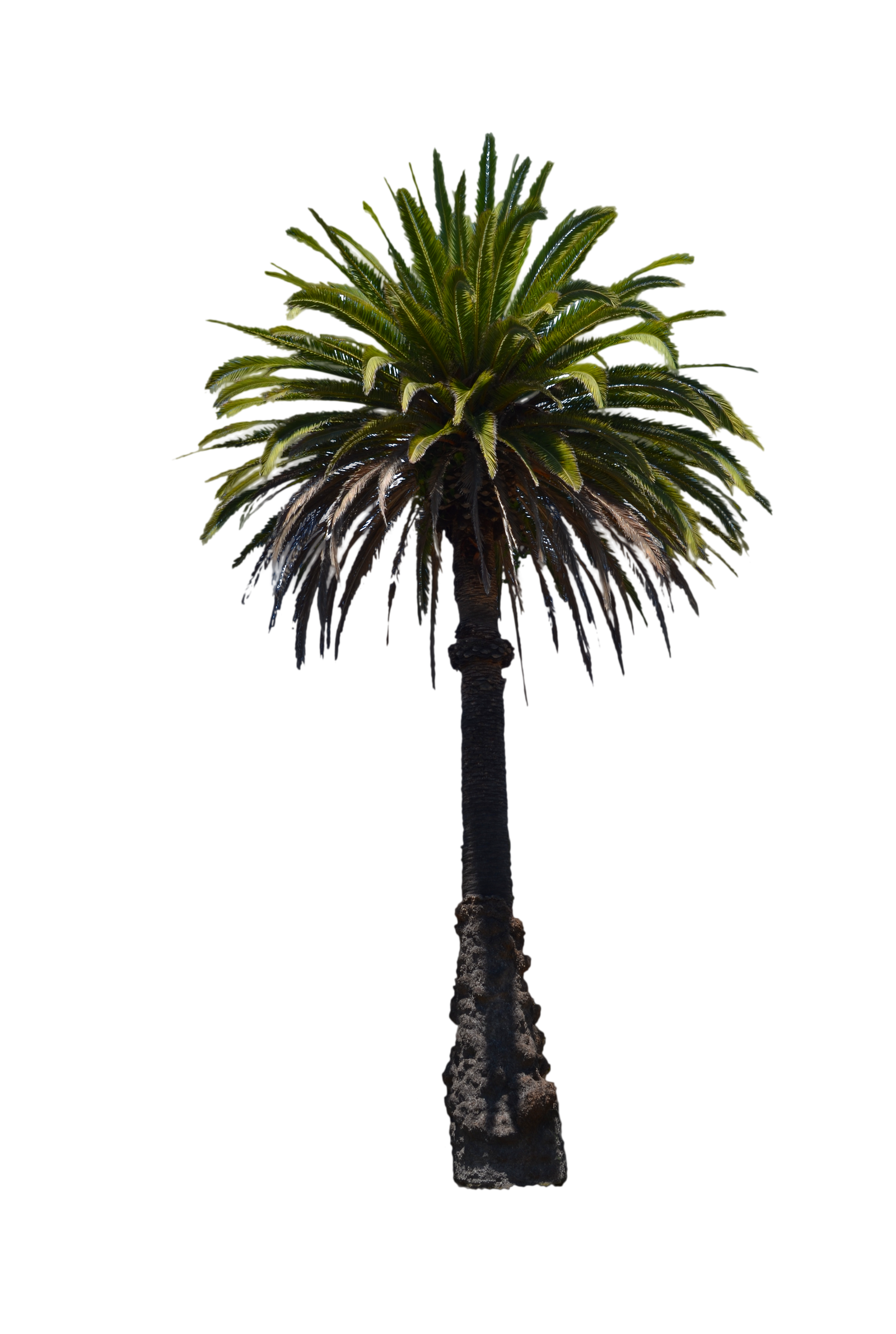 Palm Tree Stock Photo -PNG by annamae22 on DeviantArt