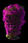 Violet Purple Bush PNG Stock Photo