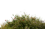 Wild Flowers With Grass 2 Stock Photo- 0081-PNG