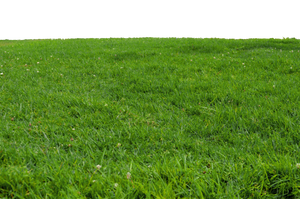 Grass at Park 1 Stock Photo-PNG-0166 by annamae22