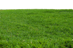 Grass at Park 1 Stock Photo-PNG-0166