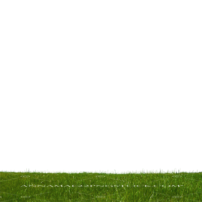 Grass at Park 2 Stock Photo-PNG-0160