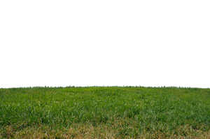 Grass at Park 2 Stock Photo-PNG-0160 by annamae22