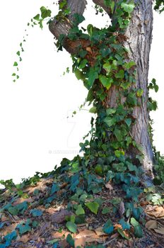 Tree with Ivy Stock Photo_ 0014 - PNG