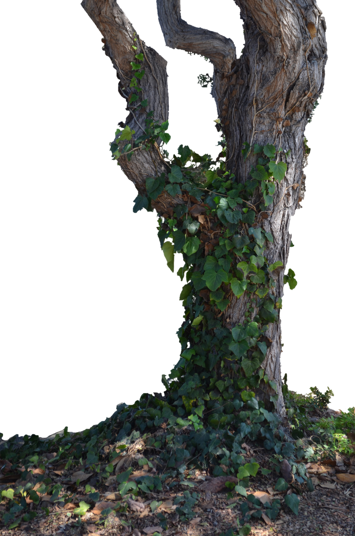Tree stock Photo 0024 PNG by annamae22