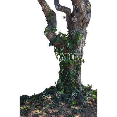 Tree stock Photo 0024 PNG