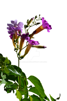 Flowers Stock Photo_0060 PNG