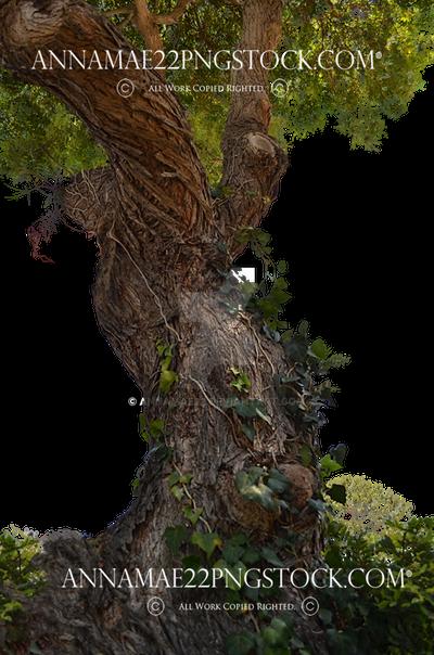 Tree PNG Stock Photo 0716 Transparent Image