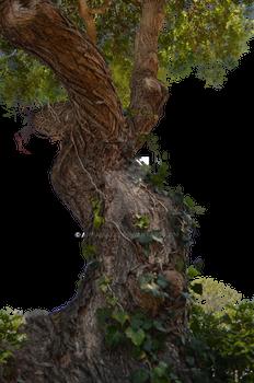 Tree  Stock Photo DSC 0716 - PNG