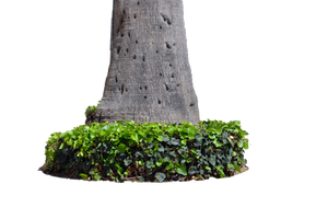 Tree Trunk W Plants Stock Photo 3  0040 - PNG by annamae22