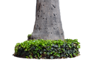 Tree Trunk W Plants Stock Photo 3  0040 - PNG