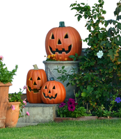 Halloween Pumkin Display Stock Photo DSC 0029 -PNG by annamae22