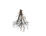 Floating Island Tree Trunk Rework -PNG Roots