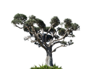 Tree Stock Photo DSC 0016  - PNG