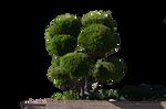 Round Tree Stock Photo DSC 0023- PNG