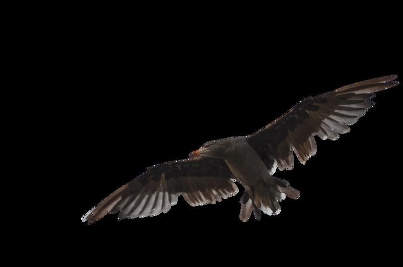 Seagull Bird Stock Photo DSC 0341 PNG