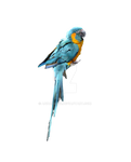 Blue Parrot on a Perch Stock Photo 0083 PNG