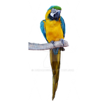 Tropical Parrot Stock Photo 0812 PNG