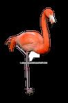 Flamingo Stock Photo 0310 PNG