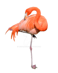 Flamingo Stock Photo 0319 PNG