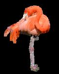 Flamingo Stock Photo 0319 PNG
