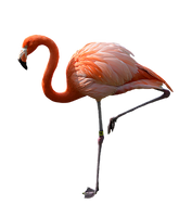Pink Flamingo Stock Photo DSC 0441 PNG by annamae22