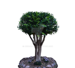 Tracys Cape Murtle Tree Stock Photo 0070 PNG