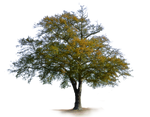 Country Road Tree PNG Stock Photo 0456 Rough-Cut