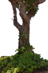 Tree with Ivy Stock Photo  0008 PNG Rough-Cut