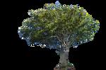 Tree Stock Photo DSC 0261 PNG