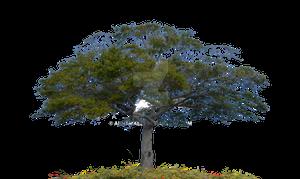 Tree Stock Photo 0007 PNG copy 2
