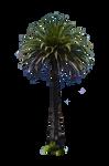 Palm Tree Stock Photo DSC 0018 PNG