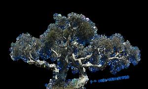 Cypress Tree Stock Photo 0252 PNG Rough Cut