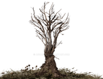 Roots-Tree Roots Dark Brownish PNG Stock