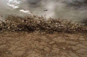 Desert Dunes Stock Photo-Premade background Orig-C