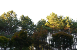 Autum Forest Canopy Stock Photo 0080 PNG