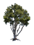 Tree Stock Photo PNG Stock -0026 Rough-Cut